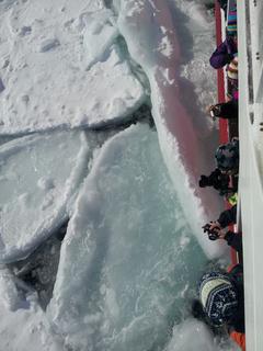 船内から見下ろす流氷.jpg